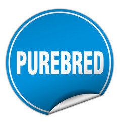 Purebred round blue sticker isolated on white vector