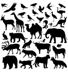 Animal world vector