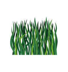 colorful icon of long green grass element vector image