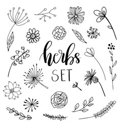 Floral and herbal set vector