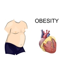 Obesity body and heart vector