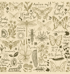 seamless pattern with hand-drawn insects and herbs vector image