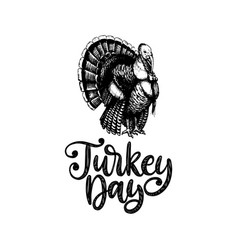 turkey day hand lettering vector image