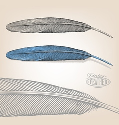 Feather in engraving style vector image