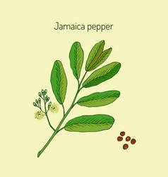 Allspice or jamaica pepper vector