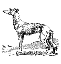 Borzoi dog engraving vector