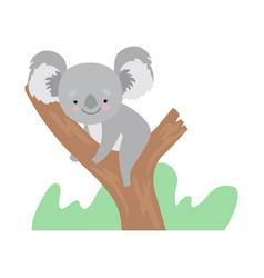 cute koala bear sitting on tree branch funny grey vector image