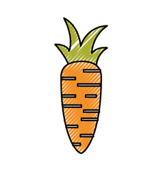 Fresh carrot isolated icon vector