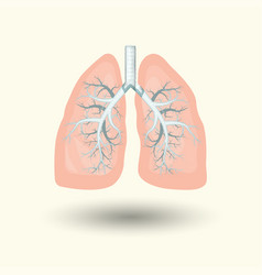 human lungs cartoon style vector image