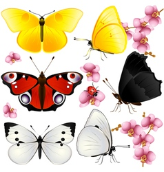 Butterflies set with orchids small vector image