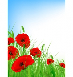poppy field vector image