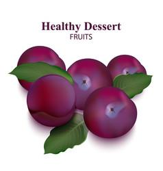 fresh plum isolated on white organic vector image