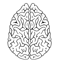 brain top vector image