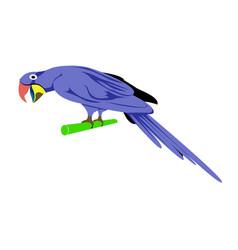 Cartoon animal parrot vector