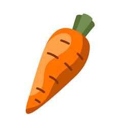fresh ripe carrot vector image