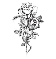 Hand drawn snake with rose vector