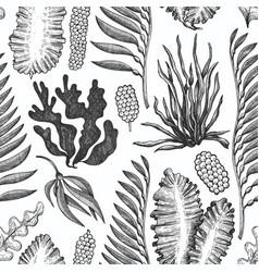 Seaweed seamless pattern hand drawn seaweeds vector