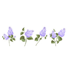 Set different lilac on white background vector