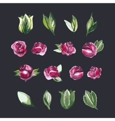 Watecolor Floral Set of Design Elements Including vector