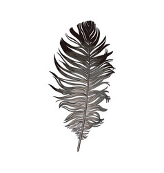 hand drawn smoth black and grey dove bird feather vector image