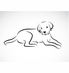 dog labrador on white background pet animal vector image vector image