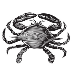 Blue Crab engraving vector