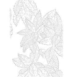 contour of aucuba for coloring vector image