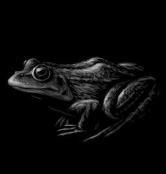 frog black and white graphic portrait vector image