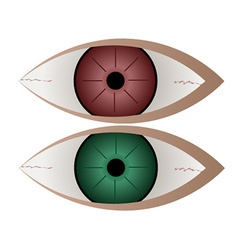Green and red eye vector