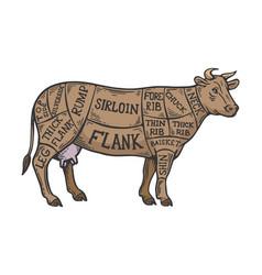 meat diagram cow color sketch engraving vector image