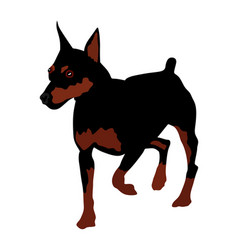 Portrait miniature pincher dog isolated vector