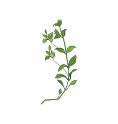 Green Wild Plant Hand Drawn Detailed vector image vector image