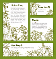 olive oil product poster sketch templates vector image vector image