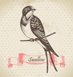 Swallow bird hand-drawn vector image