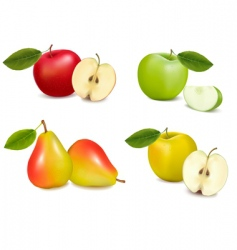 group with apples and pears vector image