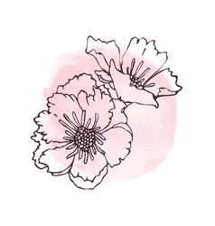 Hand drawn poppies isolated vector