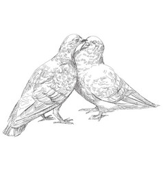 Lovers pigeons kissing in vector