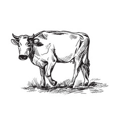 Sketches of cows drawn by hand vector