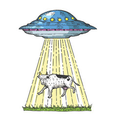 ufo kidnaps the cow color sketch engraving vector image