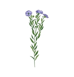 Flax Wild Flower Hand Drawn Detailed vector image