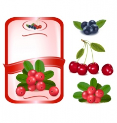 label with cranberries vector image vector image