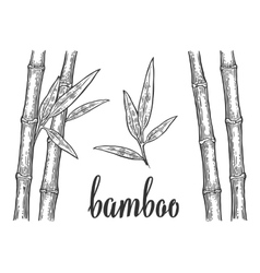 Bamboo trees with leaf white silhouettes and black vector image