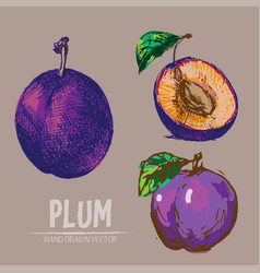 Digital detailed color plum hand drawn vector