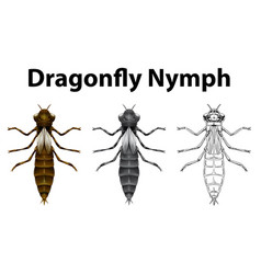 Dragonfly nymph in three different drawing styles vector