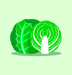 green cabbage isolated on green background vector image