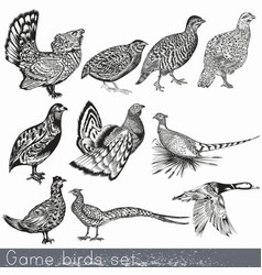 Set detailed hand drawn game birds vector