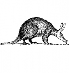 Aardvark orycteropus vector