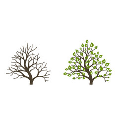 bush with leaves and without on white background vector image
