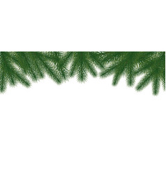 christmas tree green branches on white background vector image