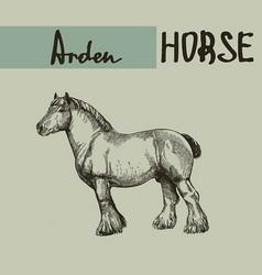 Farm draft horse arden vector